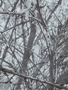 "Graphite on Paper, 9""x7"", 2016"