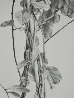 "Graphite on Paper, 12""x9"", 2016"